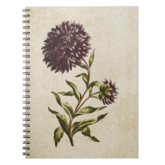 Vintage Botanical Floral Double Aster Illustration Notebooks
