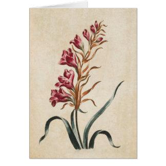 Vintage Botanical Floral Foxglove Illustration Card