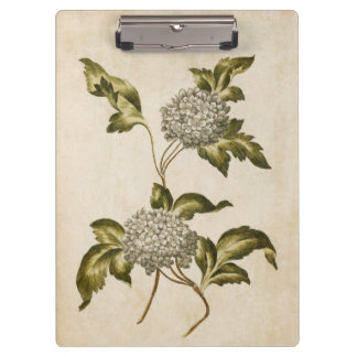 Vintage Botanical Floral Guelder Rose Illustration Clipboard