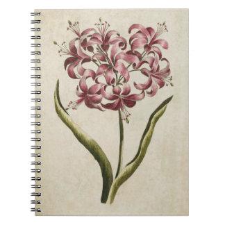 Vintage Botanical Floral Guernsey Lily Notebook
