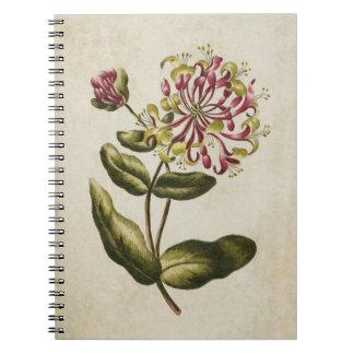 Vintage Botanical Floral Honeysuckle Illustration Notebooks