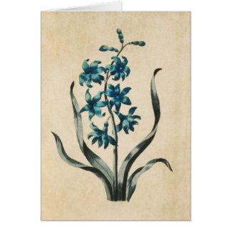 Vintage Botanical Floral Hyacinth Illustration Card