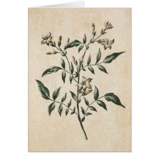 Vintage Botanical Floral Jasmine Illustration Card