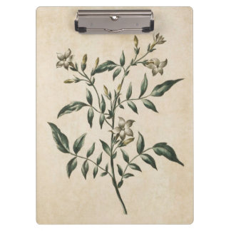 Vintage Botanical Floral Jasmine Illustration Clipboard