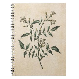 Vintage Botanical Floral Jasmine Illustration Notebook