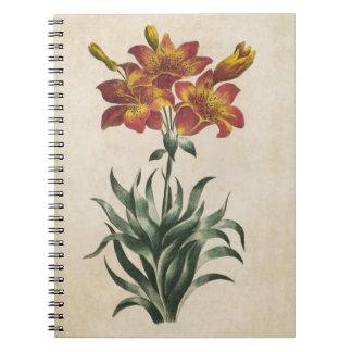 Vintage Botanical Floral Lily Illustration Notebook