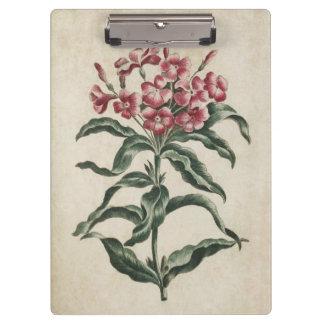 Vintage Botanical Floral Lychnidea Illustration Clipboard