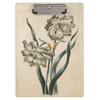 Vintage Botanical Floral Narcissus Illustration Clipboard