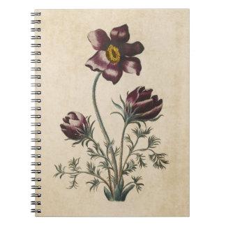 Vintage Botanical Floral Pasque Illustration Notebook