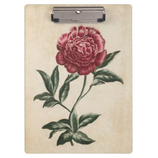 Vintage Botanical Floral Peony Illustration Clipboard
