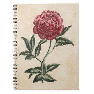 Vintage Botanical Floral Peony Illustration Notebook