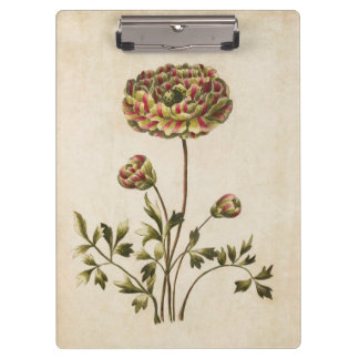 Vintage Botanical Floral Ranunculus Illustration Clipboard