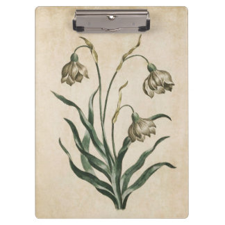 Vintage Botanical Floral Snowdrop Illustration Clipboard
