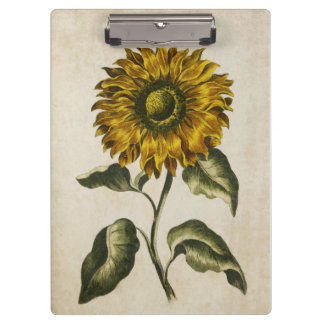 Vintage Botanical Floral Sunflower Illustration Clipboard