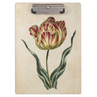 Vintage Botanical Floral Tulip Illustration Clipboard