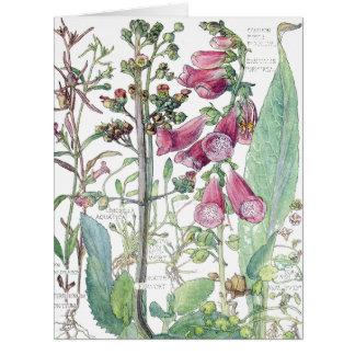 Vintage Botanical Foxglove Wildflower Flowers Card