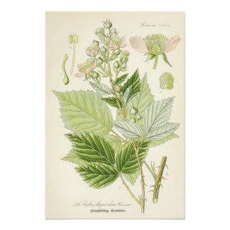 Vintage Botanical Illustration Art Photo