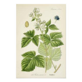 Vintage Botanical Illustration Photo Art