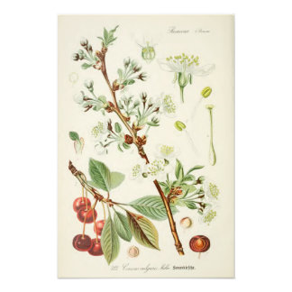 Vintage Botanical Illustration Photograph
