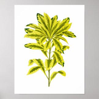 Vintage Botanical Leaf Print