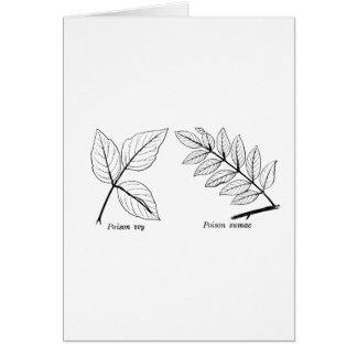 Vintage Botanical Leaves Card