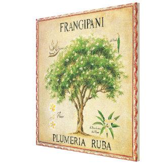 Vintage Botanical Plumeria Tree Art Deco Canvas Print