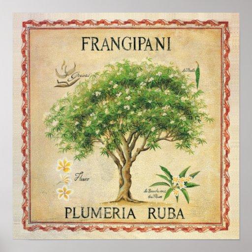 Vintage Botanical Plumeria Tree Art Deco Print