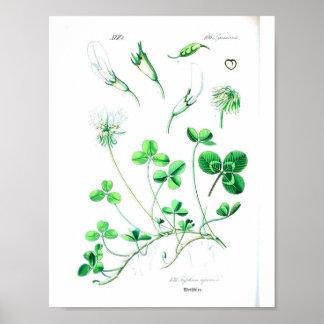 Vintage Botanical Poster - Clover