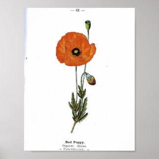 Vintage Botanical Poster - Red Poppy Flower