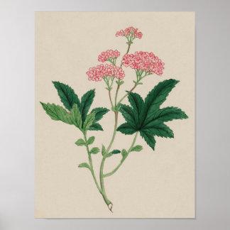 Vintage Botanical Poster - Watercolor Flower