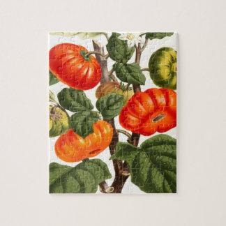 Vintage Botanical Print of Tomato Jigsaw Puzzle