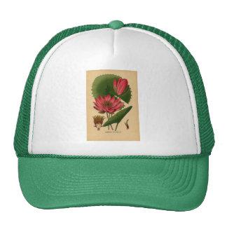 Vintage Botanical Print Pink Water Lily Lotus Mesh Hats
