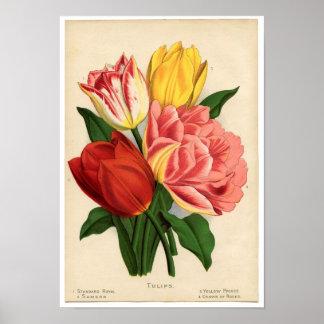 Vintage Botanical Print - Tulips