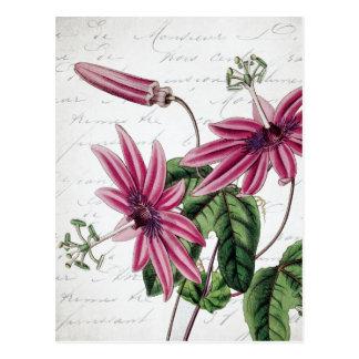 Vintage Botanical Purple Passion Flower Postcard