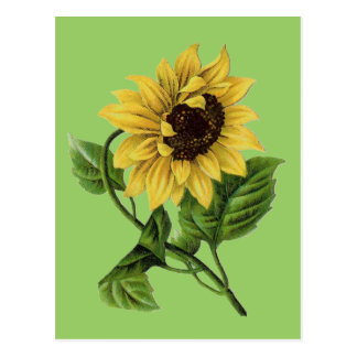 Vintage Botanicals Dandy Sunflower Postcard