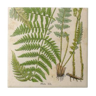 Vintage Botanicals Illustrations Tile
