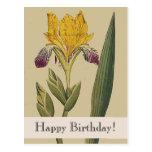 Vintage Botanicals Iris Happy Birthday Postcard