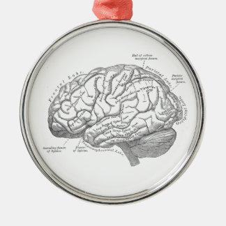 Vintage Brain Anatomy Metal Ornament