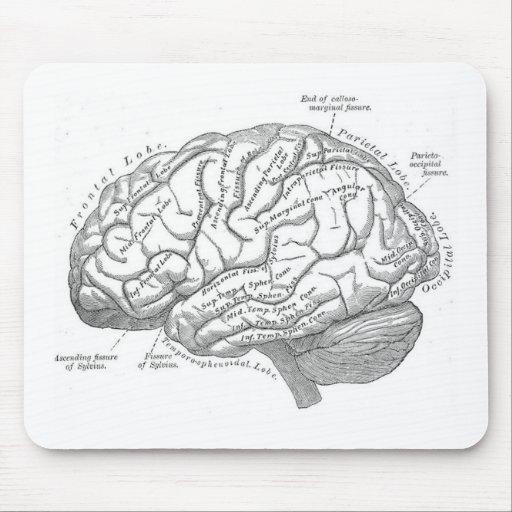 Vintage Brain Anatomy Mouse Pads