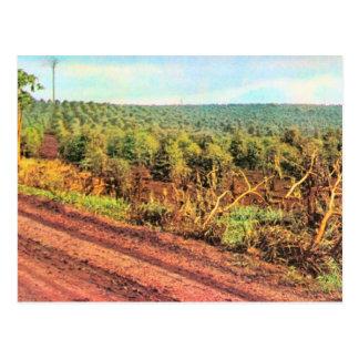 Vintage Brazil,  Coffee Plantation Postcard