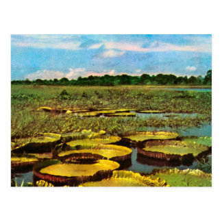 Vintage  Brazil, Fields, lake and Postcard