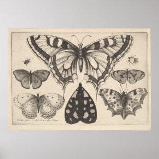 Vintage Butterflies Moth Lepidoptera Print (59)