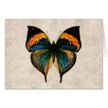Vintage Butterfly Illustration 1800's Butterflies