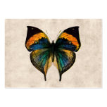 Vintage Butterfly Illustration 1800's Butterflies Pack Of Chubby Business Cards