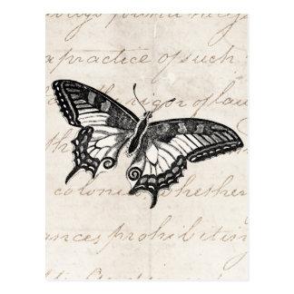 Vintage Butterfly Illustration 1800's Butterflies Postcard