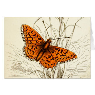 Vintage Butterfly Illustration, Orange and Black Card