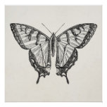 Vintage Butterfly Personalised Butterflies Insects