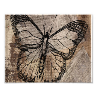 Vintage Butterfly Photo