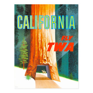 Vintage California Redwoods Travel Postcard