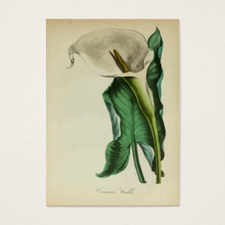 Vintage Calla Lily Flower | Botanical Watercolor Business Card